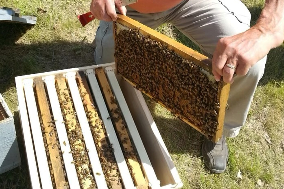 bees-gallery-2