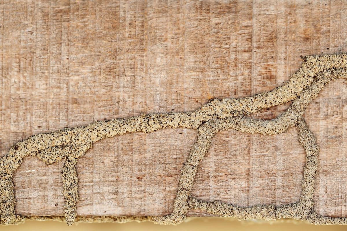 termite-page