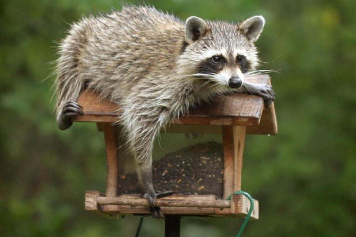 wildlife-page